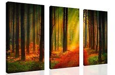 NOT FRAMED Canvas Print home decor wall art Landscape Orange Forest Picture