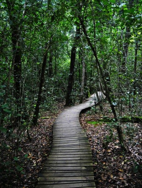 Tsitsikamma Rain Forest. This is so beautiful and peaceful! - BelAfrique - Your Personal Travel Planner - www.belafrique.co.za