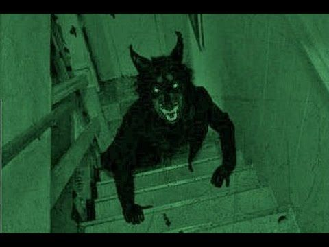 worlds most terrifying creatures caught on tape 2015