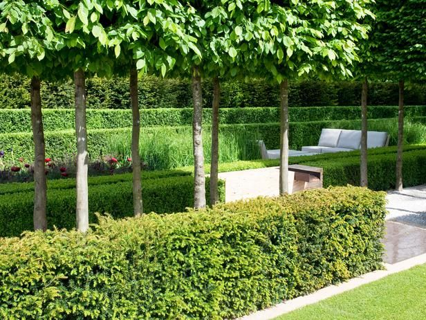 17 Best Images About Hornbeam Hedge On Pinterest Gardens