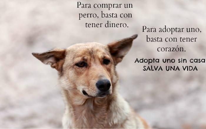 Para comprar un perro, basta con tener dinero. Para adoptar uno, basta con tener corazon. Adopta! @BicherosCba