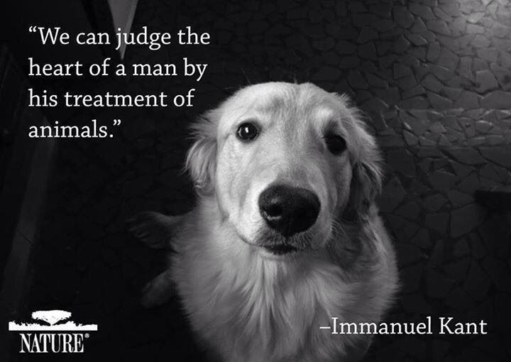 We can judge the heart of a man by his treatment of animals!!