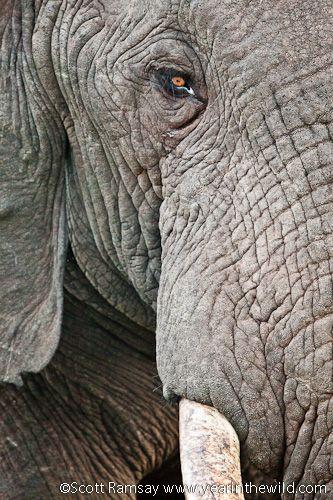 Special moments at Addo's Gorah Elephant Camp - Addo Elephant National Park, South Africa