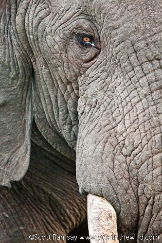Special moments at Addo's Gorah Elephant Camp - Addo Elephant National Park, South Africa