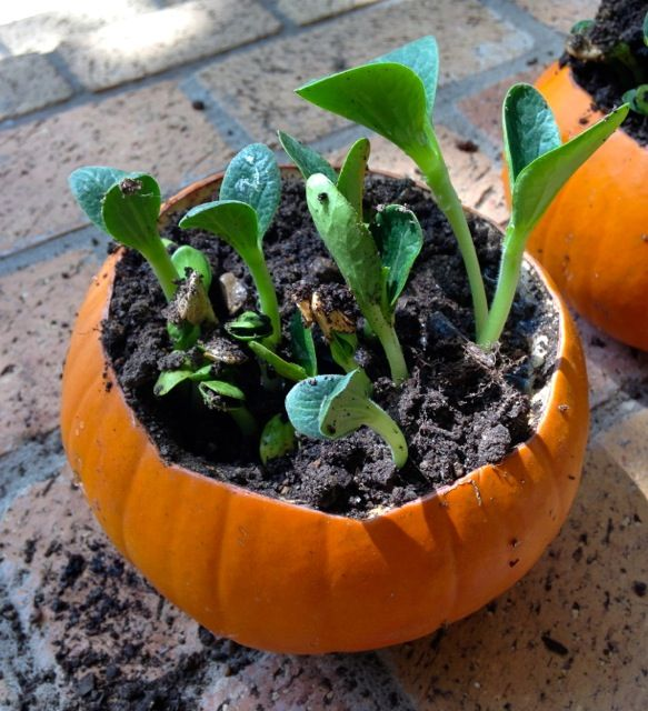 Pumpkin Activity for Kids! Easy, cheap, educational, and fun!