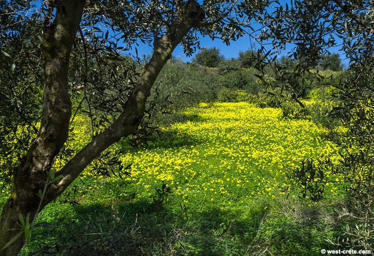 A field in spring -  click on the image to enlarge