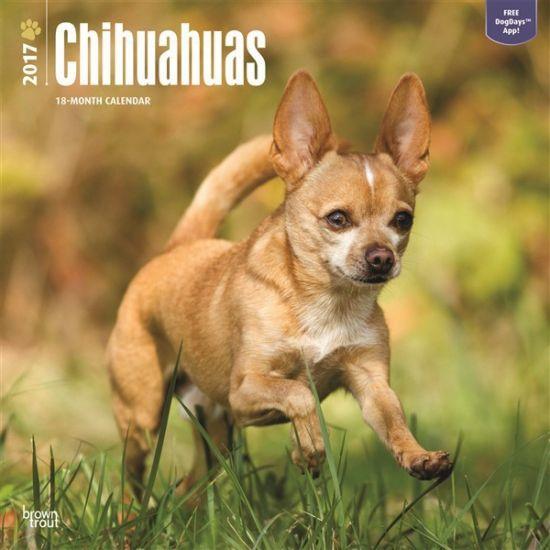Honden kalender 2017 Chihuahua. Een luxe full colour kalender van 120 grams glossy papier met 13 verschillende kwaliteitsfoto's van uw favoriete rashond. Elke kalendermaand heeft ruimte voor uw persoonlijke notities. De kalender is circa 30 x 30 centimeter en heeft 24 pagina's.