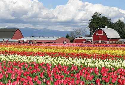 Holland Tulip Tours