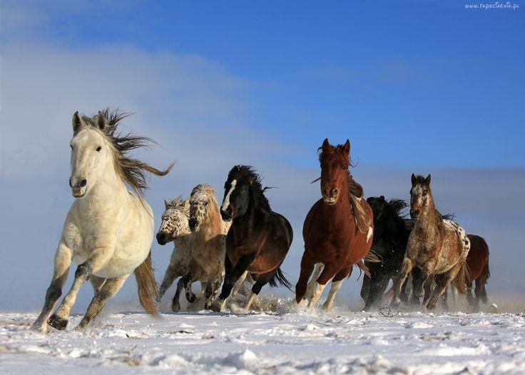 Konie, Białe, Brązowe, Czarne