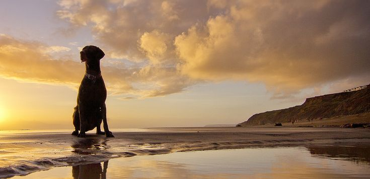 8 of the Best Dog Friendly Beaches in the UK