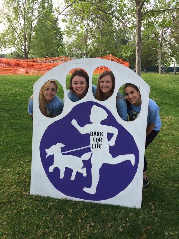 2015 Bark for Life event in Simi Valley benefiting the American Cancer Society