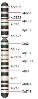 X-хромосома — Википедия