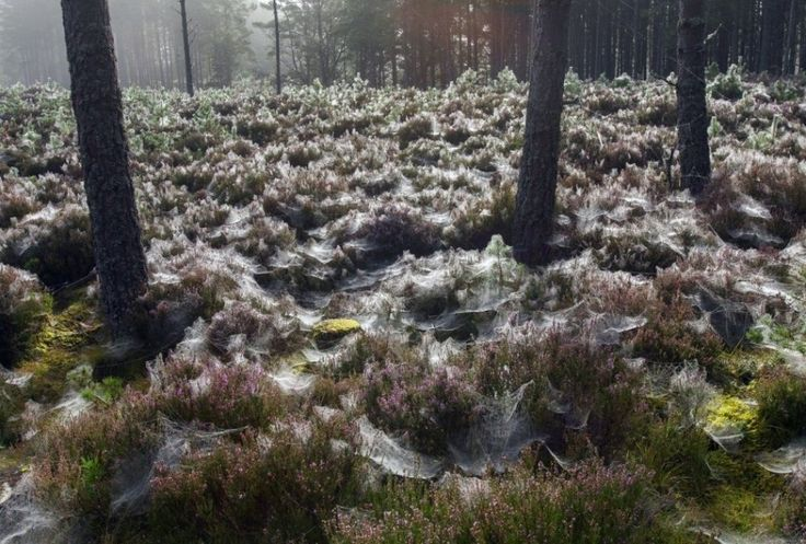 Spider webs in Abernethy forest, Scotland.The 100 best photographs ever taken without photoshop