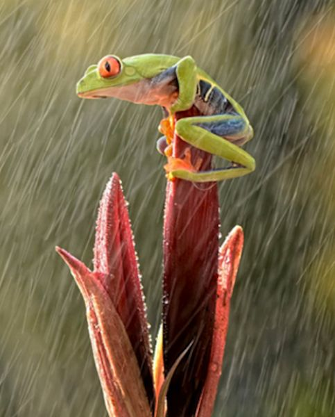 Frog on a Rainy Day by Andiyan Lutfi