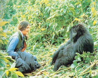 """Dian Fossey - On her gravestone, """"no one loved gorillas more.""""  She preferred the loving, nurturing creatures over humans.  She was found dead, murdered, near her research center in Africa in 1985"""