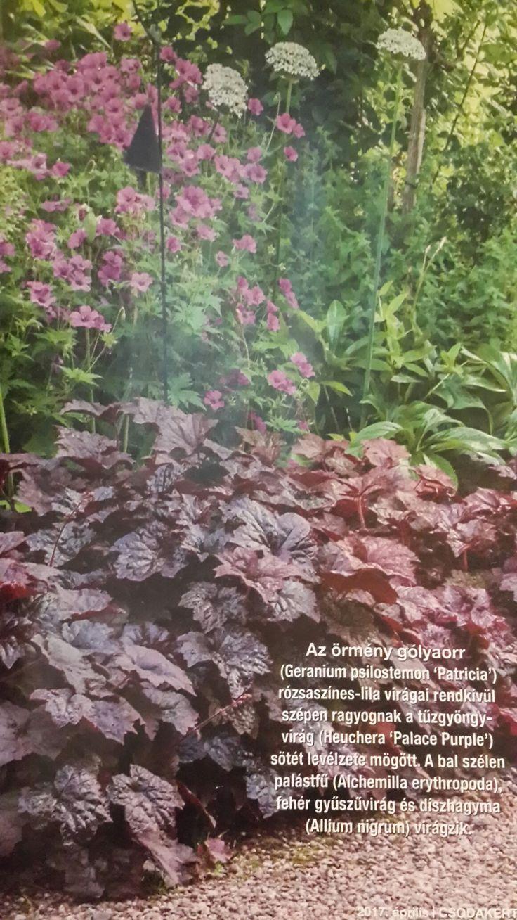 Geranium psilostemon.heuchera.