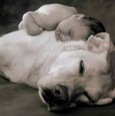 dog and baby: Picture, Babies, Animals, Dogs, Sweet, Pet, Photo, Friend