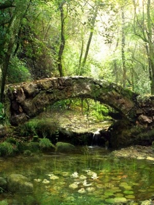 Bridges: Wood, Secret Places, Stories Books, Old Bridges, The Bridges, Stones, Photo, Little Cottages, Fairies Tales