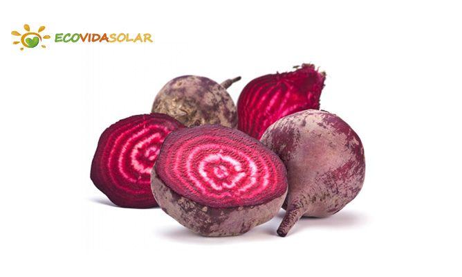 Remolacha (Beta vulgaris) - Propiedades de la remolacha