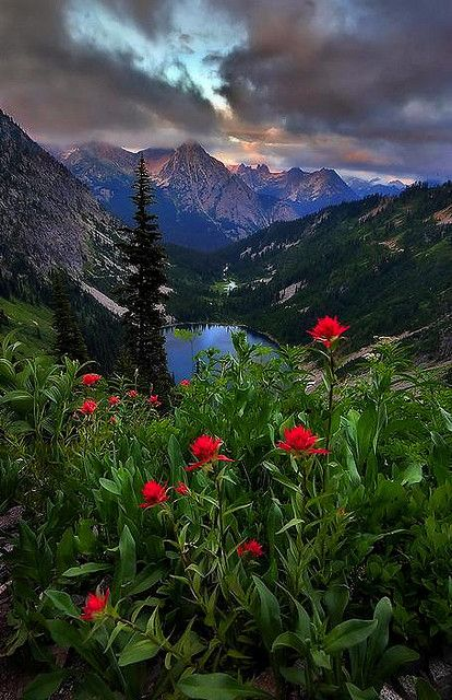 Wildflowers and a view of Lake Ann, North Cascades National Park, Washington State