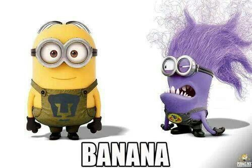 1000+ images about Minions on Pinterest   Purple minions ...