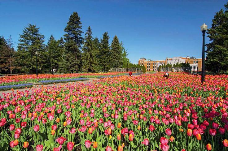 Montreal, Canadá: sugestões de atrações para ir em qualquer época do ano | Viagem e Turismo