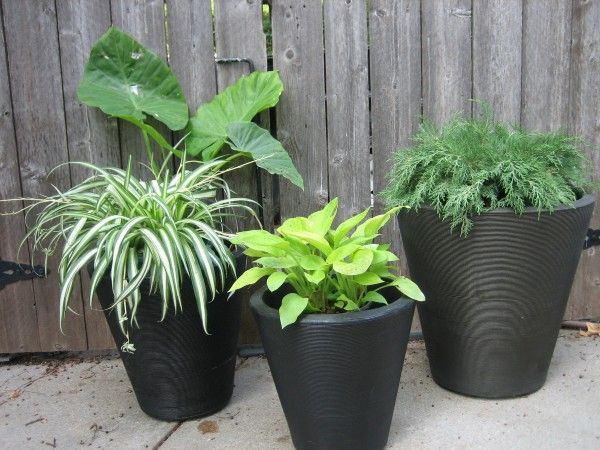84 best gardening images on Pinterest Gardening Plants and Pots