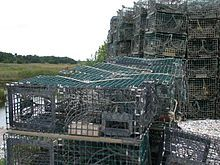 "American lobster - Lobster traps on Long Island Sound near Guilford, Connecticut. Lobster traps are rectangular cages made of vinyl-coated galvanized steel mesh or wood, with woven mesh entrances. These are baited and lowered to the sea floor. They allow a lobster to enter, but make it difficult for the larger specimens to turn around and exit. This allows the creatures to be captured alive. The traps, sometimes referred to as ""pots"", have a buoy floating on the surface."