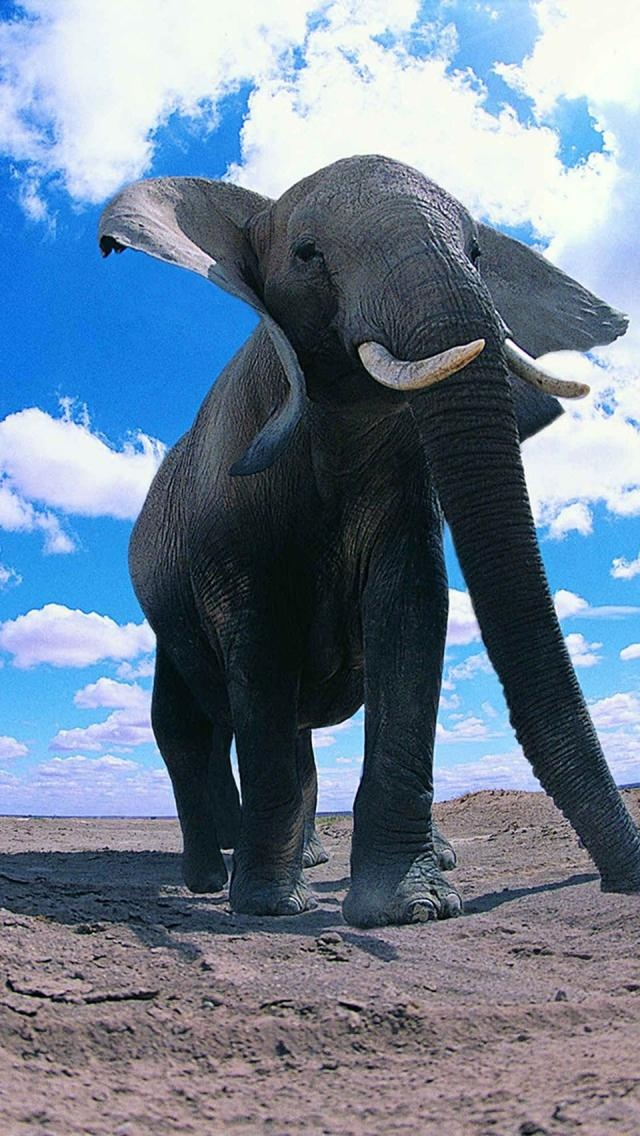 Elephant ... magnificent ... <3 www.24kzone.com