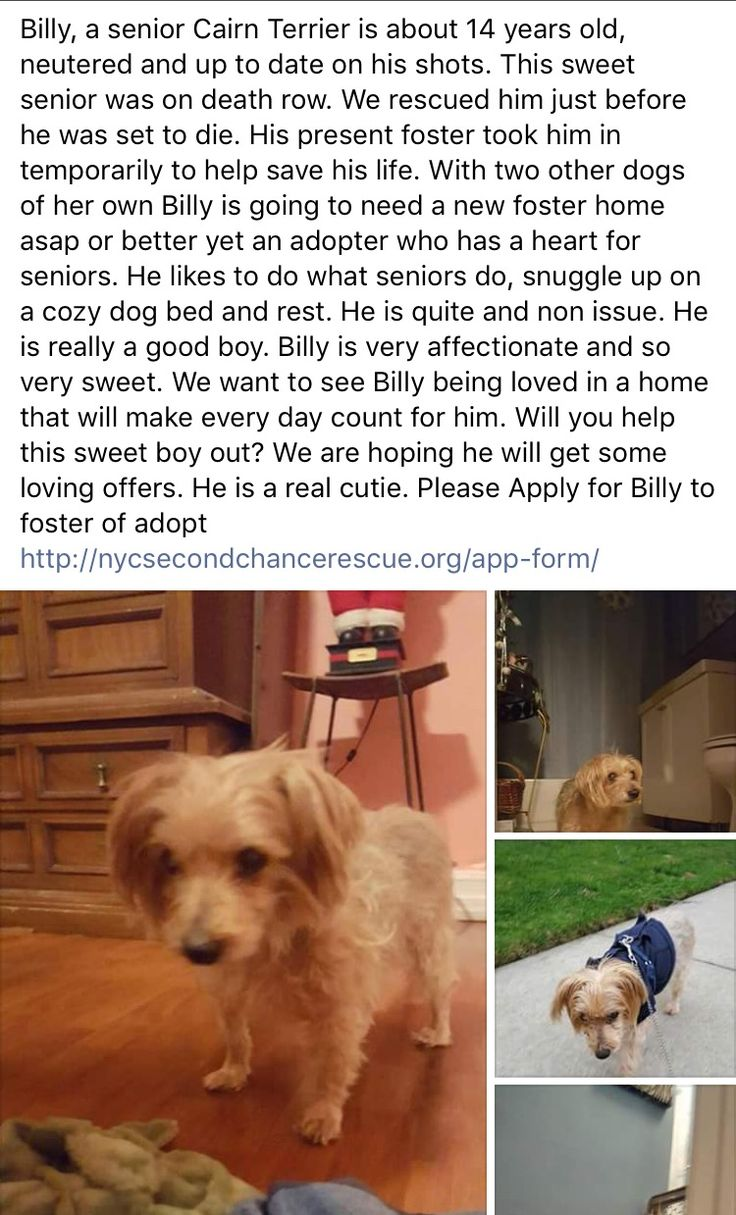 11/25/16 PLEASE APPLY FOR BILLY❤️ HE SURVIVED NYC ACC - NOW HE NEEDS LOVE AND TENDER CARE ❤️❤️ /ij https://m.facebook.com/story.php?story_fbid=1078597918915929&id=268612969914432&__tn__=%2As