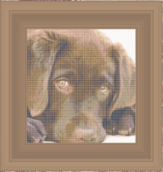 Brown Retriever puppy cross stitch pattern - Gráfico punto de cruz de Cachorro Labrador marrón