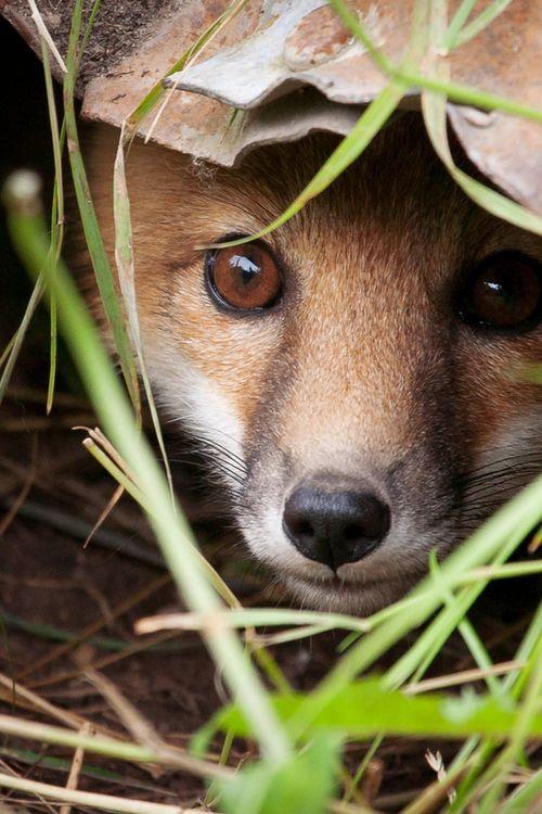 A shy meadow friend