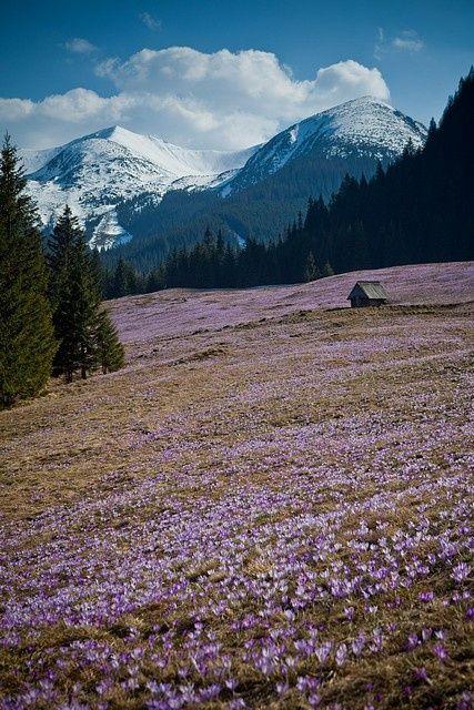 listentothemountainsound:  pine—forest:  prisbatty:  Tatra Mountains, Poland. Chocholowska Valley