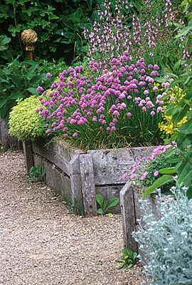 WOODEN BED IN THE HERB GARDEN WITH FLOWERING CHIVES