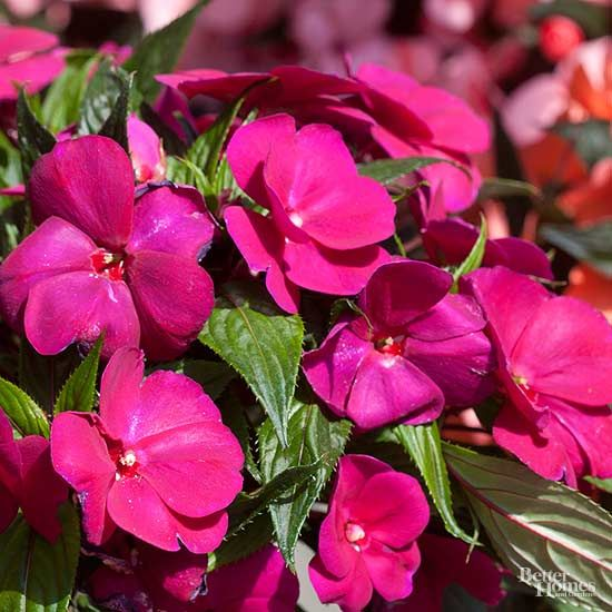best plant and garden colours bright pink images on, Natural flower