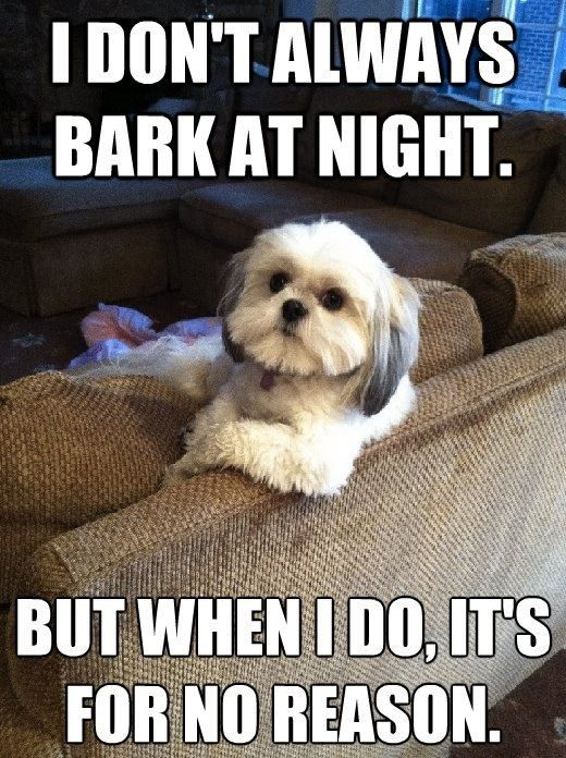 I don't always bark at night, but when I do... #funny #dogs #funnydogs #dogmeme: Animals, Funny Dogs, Pet, So True, Funny Stuff, Humor, Funnies, Shih Tzu