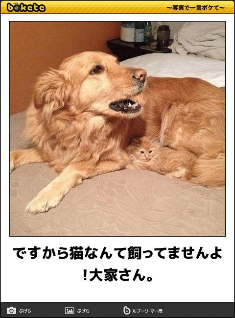 【爆笑】こんなの絶対に笑ってしまう!イヌ画像でボケてが面白すぎる(57枚) もっと見る