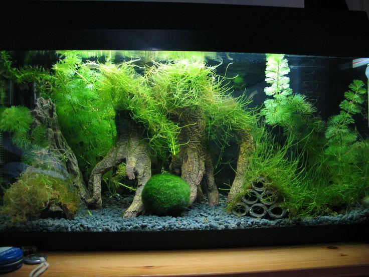 10 gallon fish tank aquascape idea with java moss trees for 4 gallon fish tank