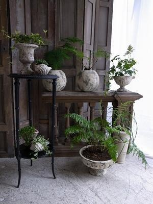 Plants : Antique Furniture demode10