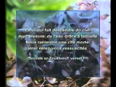 Arte documentaire Islam Les miracles scientifiques du coran - YouTube