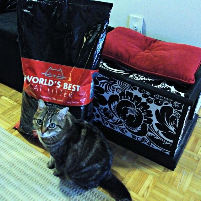 worldsbestcat , Angel, loves World's Best Cat Litter