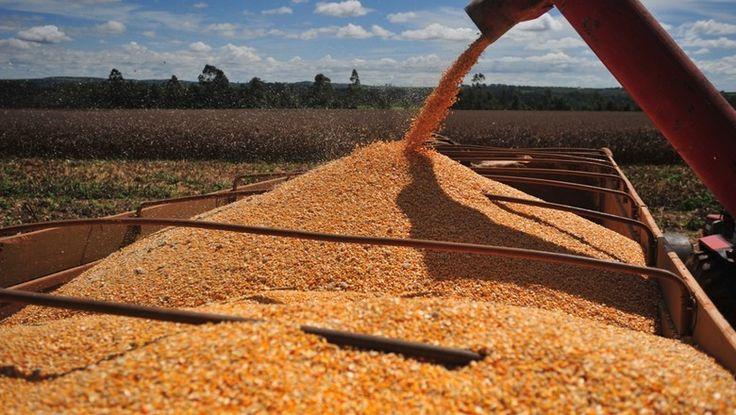 Analistas observam que os estoques oficiais são insuficientes para atender à demanda interna, num momento de forte exportação
