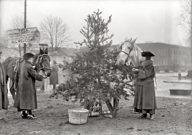 "December 1918 in Washington, D.C. ""Christmas dinner for horses."" That tree looks mighty tasty!"