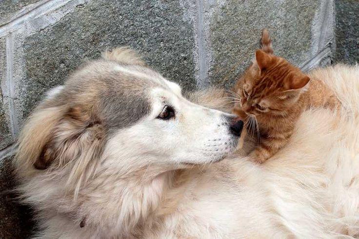 ¿Cómo presentar a tu perro y a tu gato?