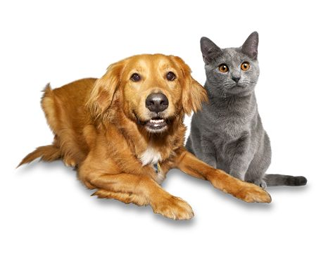 Pet Parasites - How to Protect Your Family and Pets - https://plus.google.com/+VillageVetAnimalClinicPCBrokenArrow/posts/3mP91GShs59