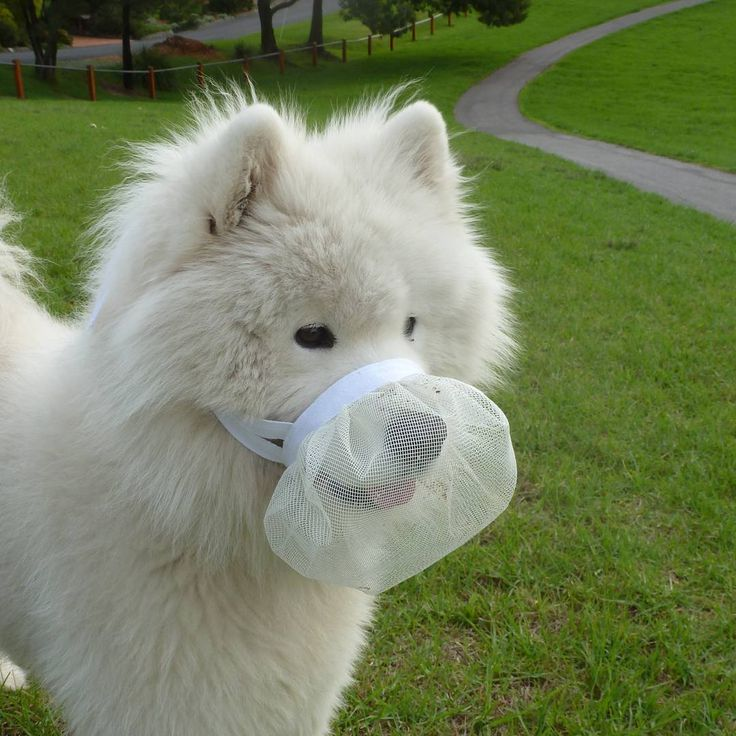Smuzzles are a soft muzzle that stops your dog from eating things they shouldn't, but still allows them to pant, drink and smile!