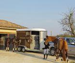 horses loading into a silver fautras horse trailer