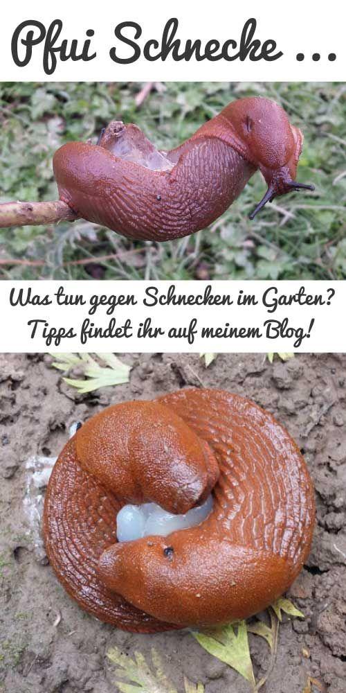 Good Tipps gegen Schnecken im Garten