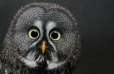 Owl Sales ﴾͡๏̯͡๏﴿ shop front testing