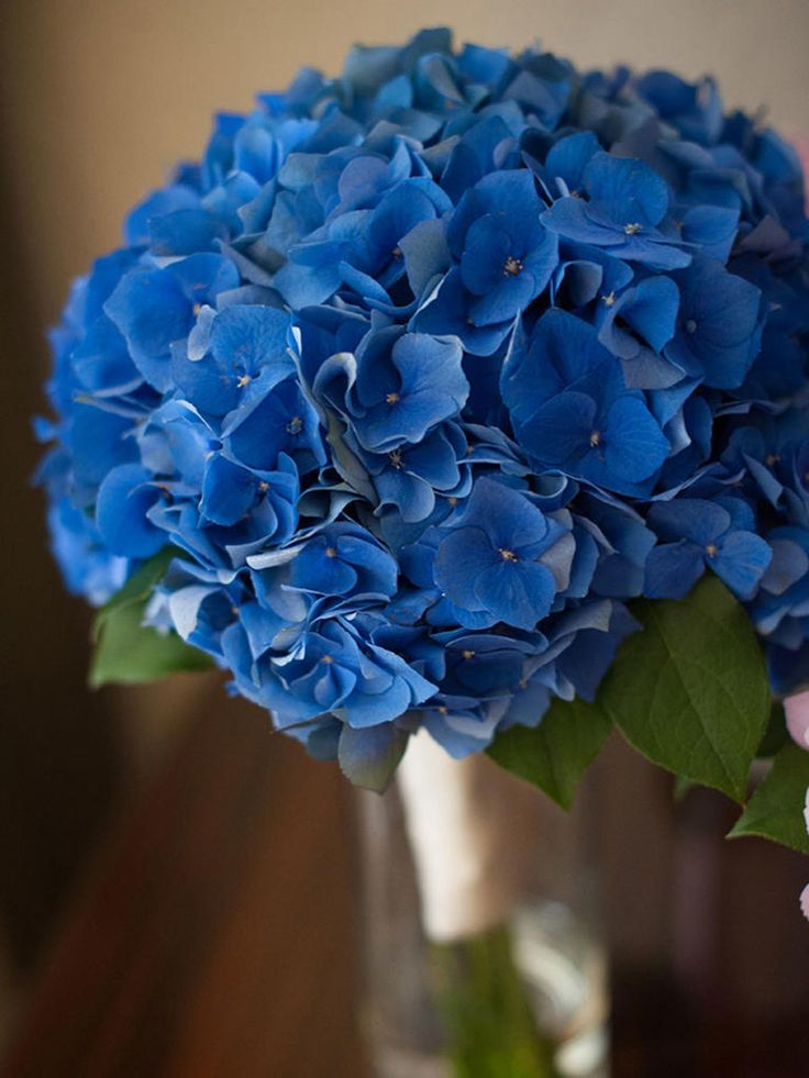 wedding flowers for less 17 best ideas about blue bouquet on blue 9582